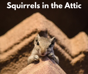 Squirrels In The Attic Sarasota Noises In Attic